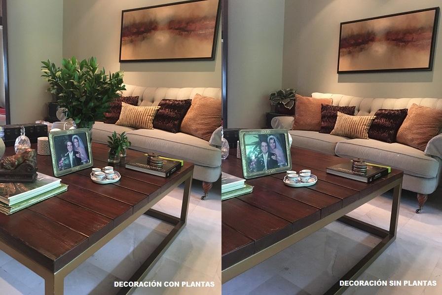 decoracion_plantas-1